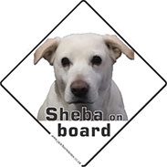 Pet on board signs